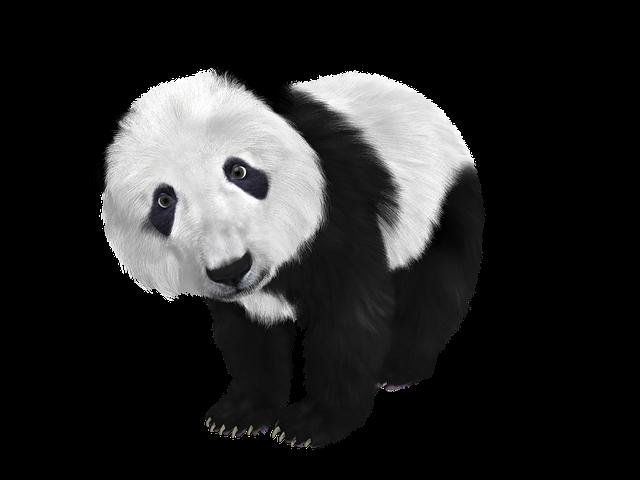 panda update